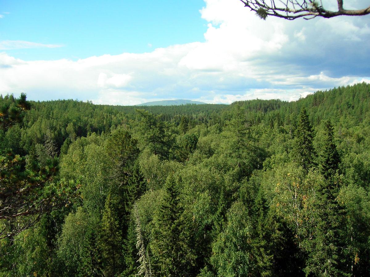 Фото привязанные в лесу 19 фотография